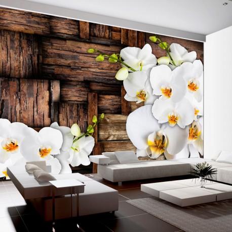 Papier peint  Blooming orchids
