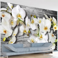 Papier peint  Callous orchids III
