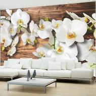 Papier peint  Forest Orchid