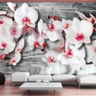Papier peint  Callous orchids