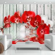 Papier peint  Ruby orchid