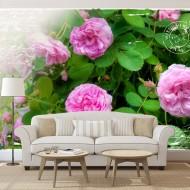 Papier peint  Summer garden