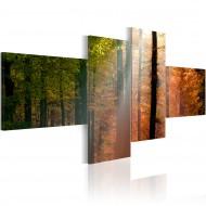Tableau  Rayons de soleil parmi les arbres