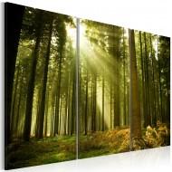 Tableau  Forêt  beauté de la Nature