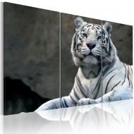 Tableau  Tigre blanc