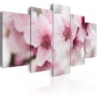 Tableau  Cerisier  beauté et douceur