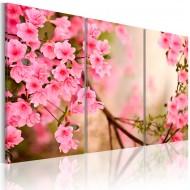 Tableau  Fleur de cerisier