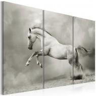 Tableau  Cheval blanc en mouvement