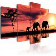Tableau  Famille des éléphents