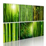 Tableau  Nombreux visages du bambou