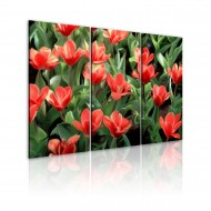 Tableau  Tulipes à fleurs
