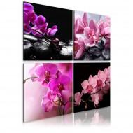 Tableau  Orchidées plus belles que jamais