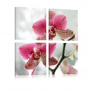 Tableau  Orchidée de fantaisie