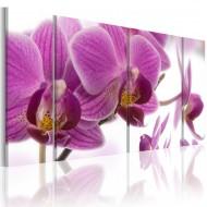 Tableau  Marvelous orchid