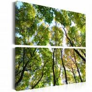 Tableau  Treetops