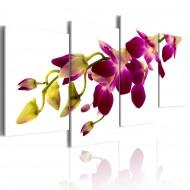 Tableau  Eclat dune orchidée