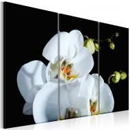 Tableau  Orchidée blanche comme neige