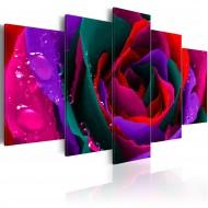 Tableau  Multicoloured rose