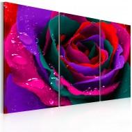 Tableau  Rose irisée