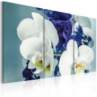 Tableau  Orchidées chimériques