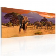 Tableau  March of african elephants