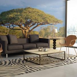 Papier peint - Acacia africain - Parc national Hwange, Zimbabwe