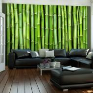 Papier peint  Mur vert bambou