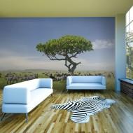 Papier peint  Afrique  zèbres à lombre dun arbre