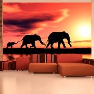 Papier peint  éléphants famille