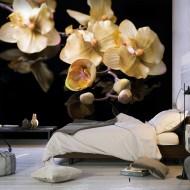 Papier peint  Orchids in ecru color