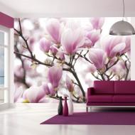 Papier peint  Branche de magnolia en fleurs