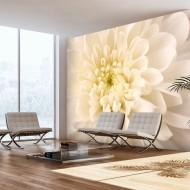 Papier peint  Dahlia blanc