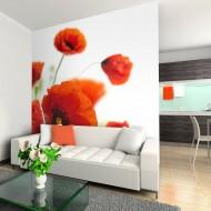 Papier peint  Poppies on the wihite background