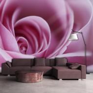 Papier peint  Rose rose