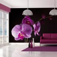 Papier peint  de bon goût  orchidée