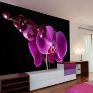Papier peint  élégant  orchidée