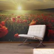 Papier peint  Morning on the poppy meadow