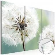 Tableau sur verre acrylique  Fluffy Dandelions [Glass]