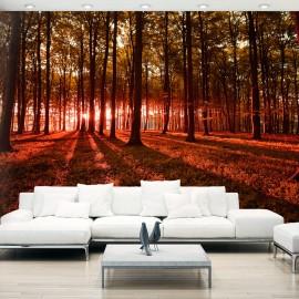 Papier peint - Autumn Morning
