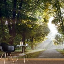 Papier peint - Promenade matinale