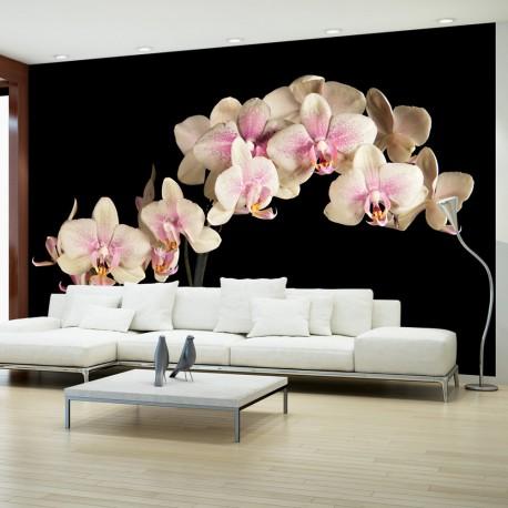 Papier peint  Orchidée en fleurs