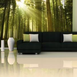 Papier peint - Forêt de pins