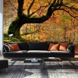 Papier peint - Automne, forêt et feuilles