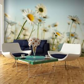 Papier peint - Marguerites - prairie de printemps