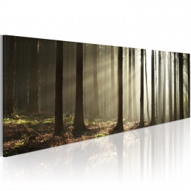 Tableau - Canvas print - Morning in the woods