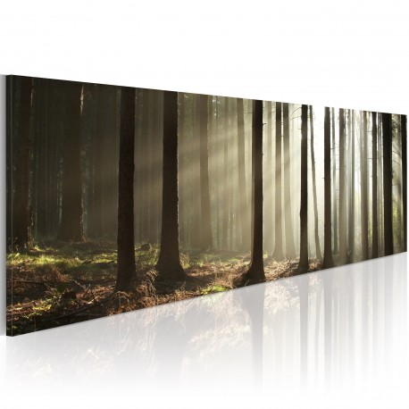 Tableau  Canvas print  Morning in the woods