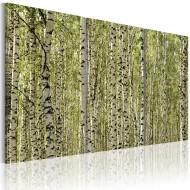 Tableau  Forêt de bouleaux