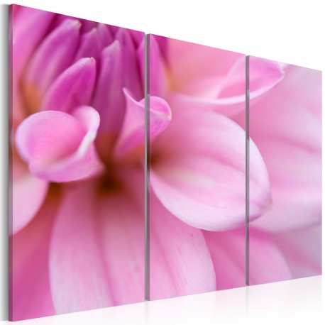 Tableau  Dahlia rose