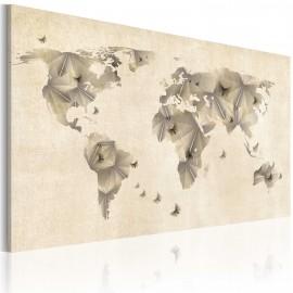 Tableau - Atlas des papillons