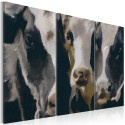 Tableau - Piebald cow